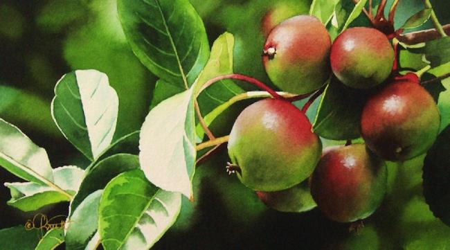 Baby_Apple_Tree_JacquelineGnott